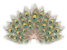Peacock Tail Illustration Stock Photos