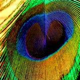 Peacock& x27; textura da pena de s imagens de stock