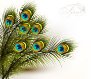 Peacock vector colorful ferns on a white background. Cute  vector background with green peacock ferns on white Stock Images