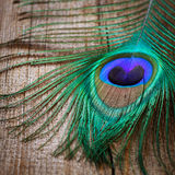 Peacocks feather  on wooden board Stock Photography