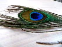 Peafowl piórko Zdjęcia Royalty Free