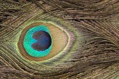 Peafowl spot Stock Photos