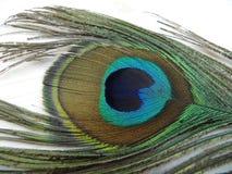 Peafowlfjäder Arkivfoton