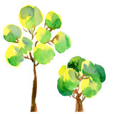 peair结构树 免版税库存图片