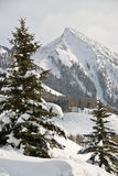 The Peak. Of Mt. Crested Butte and Trees Royalty Free Stock Images