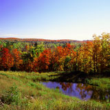 Peak Autumn in Superior National Forest Royalty Free Stock Images