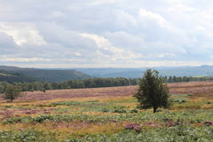 Peak District Landscape. A landscape of fields in August  containing bracken and purple heather Stock Photography