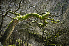Peak district. Tree in peak district national park Royalty Free Stock Photos