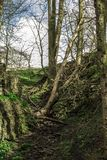 Peak District Valley Winter Trees stock photography