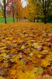 Peak Fall Colors in Oregon Tree Lined Street USA Royalty Free Stock Photography