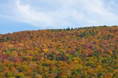 Peak Foliage in Vermont. Foliage in Stowe, Vermont this Fall Royalty Free Stock Images