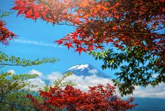 The Peak of Mt. Fuji between cloud with red and green leaf in th stock images