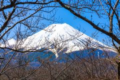 The peak of mt. fuji look through the sakura branches Royalty Free Stock Photos