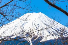 The peak of mt. fuji look through the sakura branches Stock Image