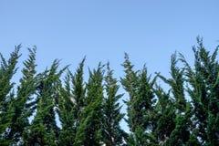 Peak pine tree on sky Royalty Free Stock Photos