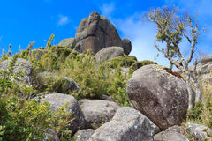 Peak prateleiras mountain old tree in Itatiaia National Park Stock Photos