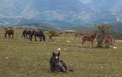 Peak of Subasio mountain in Umbria with grazing horses royalty free stock photos