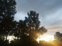 Peak of sun through pines stock image