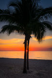 Peaking Through. Sunset at Cozumel Mexico with sun peaking through two palm trees Stock Photography