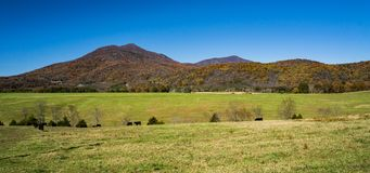 Peaks of Otter, Bedford County, Virginia, USA. Autumn view of the Peaks of Otter located in the Blue Ridge Mountains located in Bedford County Virginia, USA stock images