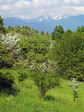 Peaks of Rohace and green trees Stock Image