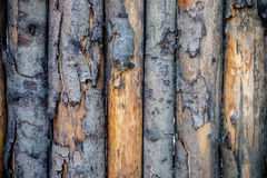 Pealing wood texture Royalty Free Stock Photo