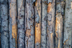 Pealing wood texture. Good for background image Royalty Free Stock Images