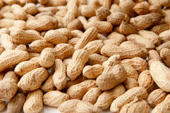 Peanut. Pile of peanuts under white background Royalty Free Stock Images