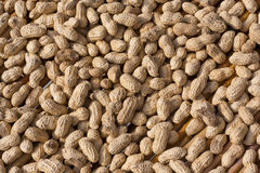 Peanut Royalty Free Stock Photos