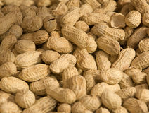 Peanut. The stack of, drying of peanuts Royalty Free Stock Image