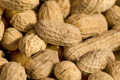 Peanut. The stack of, drying of peanuts Royalty Free Stock Photography