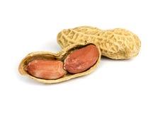 Peanut . Stock Image