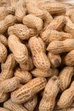 Peanut-Arachis hypogaea Royalty Free Stock Photo