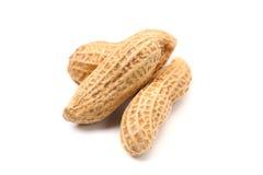 Peanut-Arachis hypogaea Stock Images