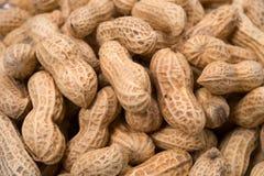 Peanut-Arachis hypogaea Royalty Free Stock Photos