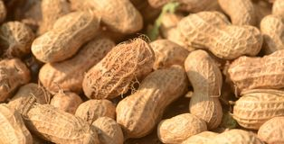 Peanuts. A peanut Arachis hypogaea, also known as a groundnut or goober, is a legume crop grown mainly for its edible seeds. It is widely grown in the tropics Stock Images