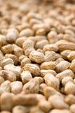Peanut background stock photo