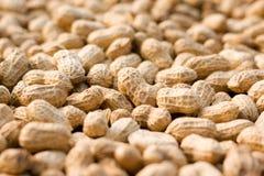 Peanut background royalty free stock photography