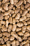 Peanut background Stock Photos