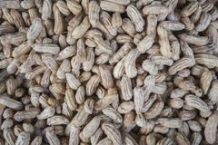 Peanut background thailand Stock Photography