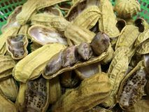 Peanut bean. With shell Stock Photos