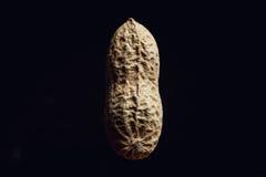Peanut on black background Stock Images