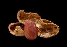 Peanut on black Stock Photos