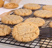 Peanut Butter Cookies. On a cooling rack stock photography