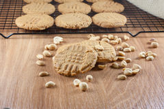 Peanut Butter Cookies. Cooling on a rack Royalty Free Stock Image