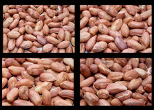 Peanut close up. Fresh Nuts It is tasty Fried Oily the Peanut a Food Preparation It is prepared Eat stock photography