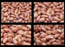 Peanut close up. Stock Photography