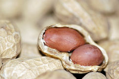Peanut Closeup Royalty Free Stock Photography