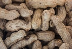 Peanut. Closeup peanut or groundnut shell Stock Image