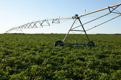 Peanut Farm Irrigation. A large farm irrigation sprinkler sits in a field of peanuts Stock Photo